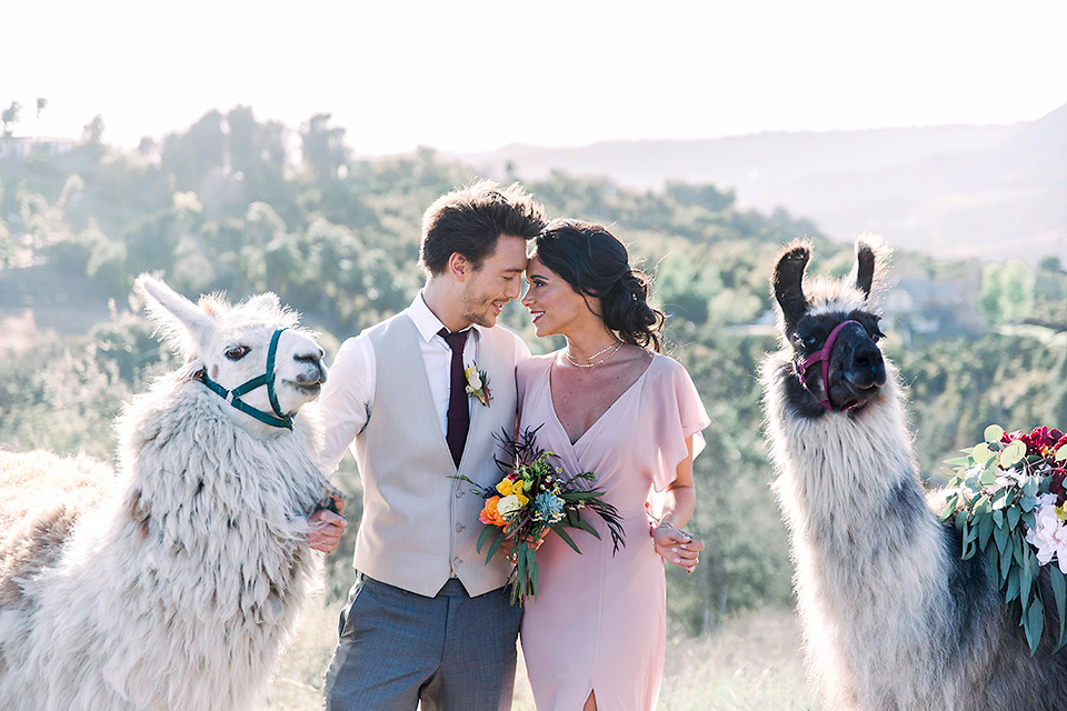 Emerald-peak-shoot-bridal-party-with-llamas-groomsmen-in-grey-pants-with-a-tan-vest-and-burgundy-tie-bridesmaid-in-a-flowing-pink-dress-llamas-in-the-background