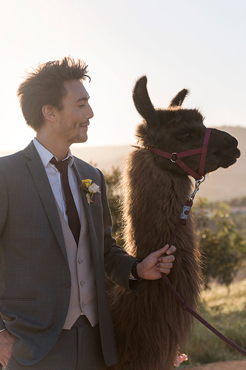 Emerald-peak-shoot-groomsmen-with-llama-groomsman-in-charcoal-pants-tan-vests-and-a-burgundy-tie
