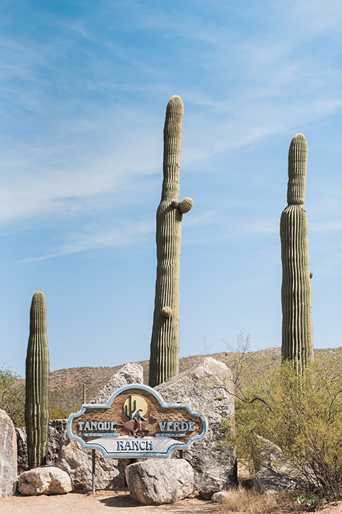 tanque-verde-ranch-arizona-wedding-cacti