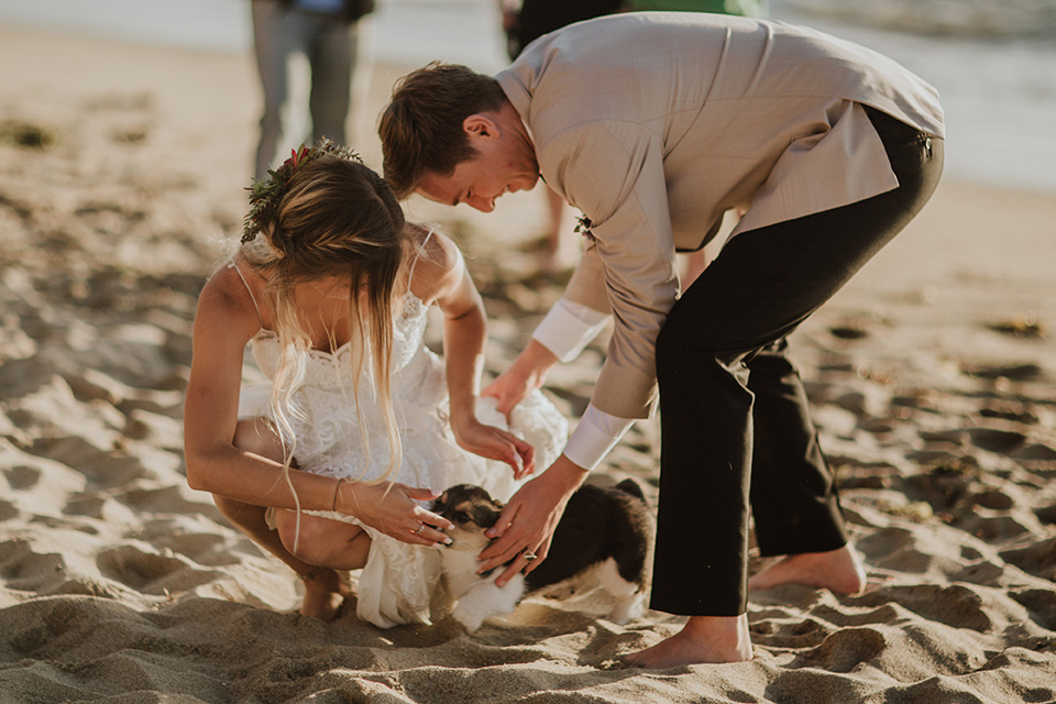 Sunset-Cliffs-Elopement-bride-and-groom-petting-dogs-bride-in-a-lace-form-fitting-gown-with-thin-straps-groom-in-a-tan-suit-coat-with-black-pants-and-black-bow-tie