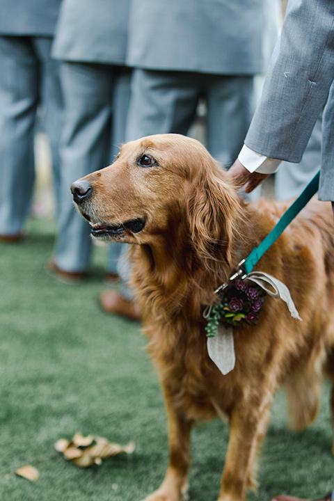 hidden-acres-wedding-doggie