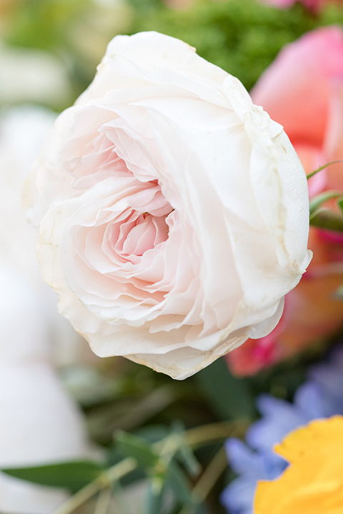 palos-verdes-shoot-pink-flower