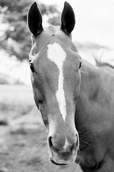 close up on horse at ranch