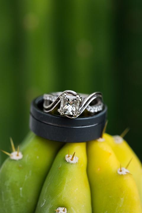rings on cacti