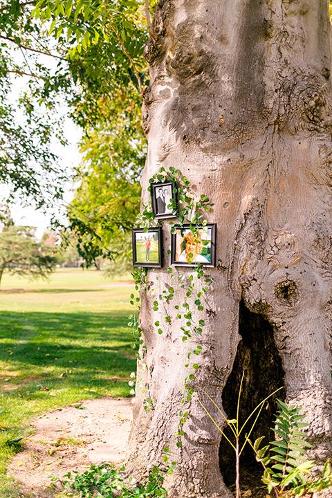 framed photos on the tree
